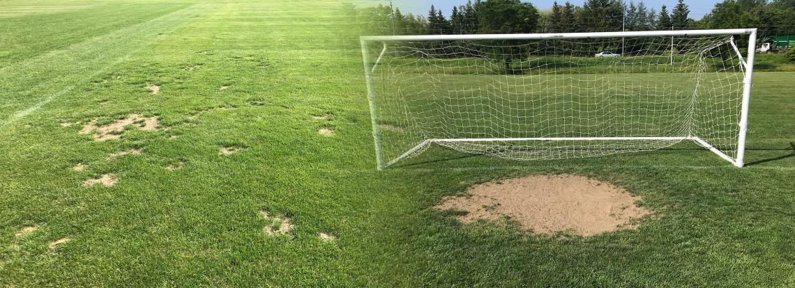 managing sports field bare spots